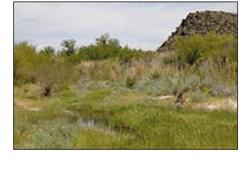Wetlands Birding Trails