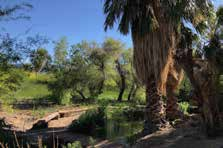 Beautiful creek in Shoshone Wetlands. Shoshone, California.