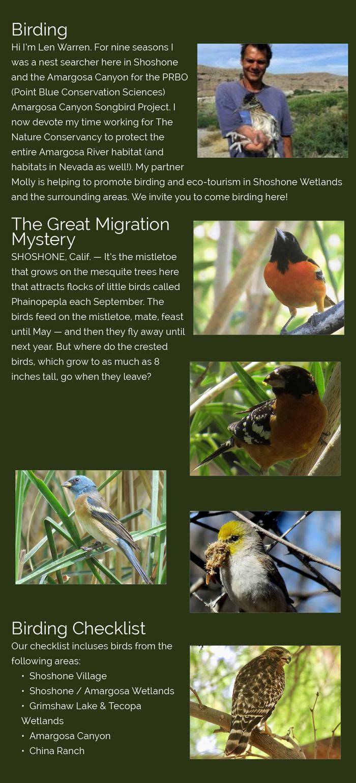Shoshone Village Birding